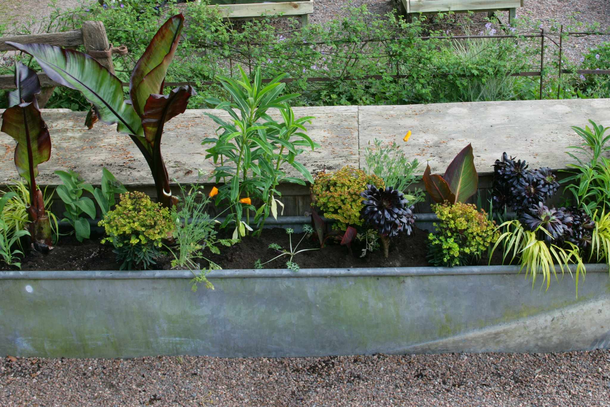 How to create an exotic container display