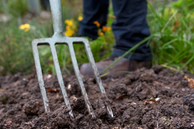 Forking compost/manure into the ground before planting