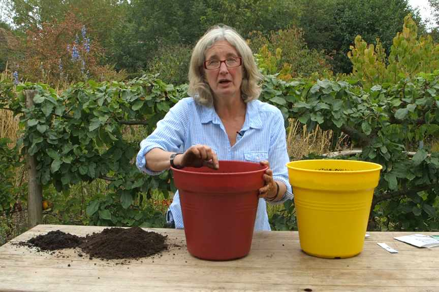 Sowing salad in pots