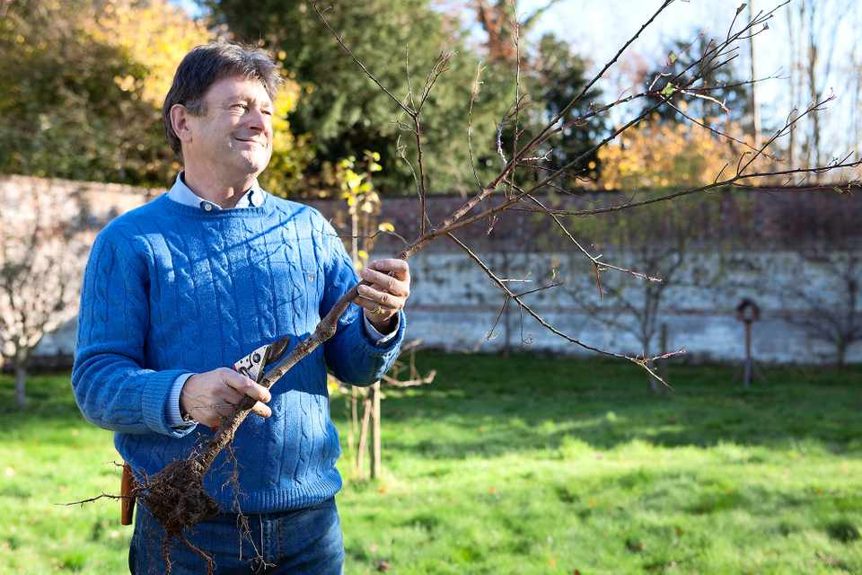 Alan Titchmarsh holding a maiden sized tree