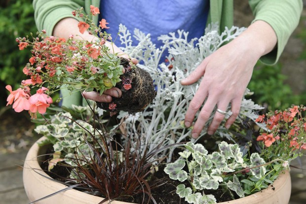 Planting up the container