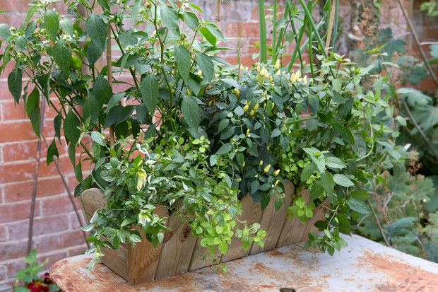 chilli-and-herb-window-box-container-idea-2