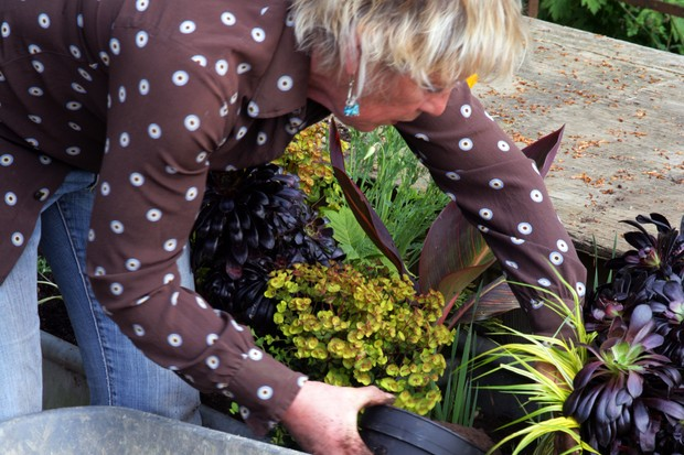 How to create an exotic container display - topping up with compost