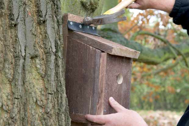 How to make a hinged nest box