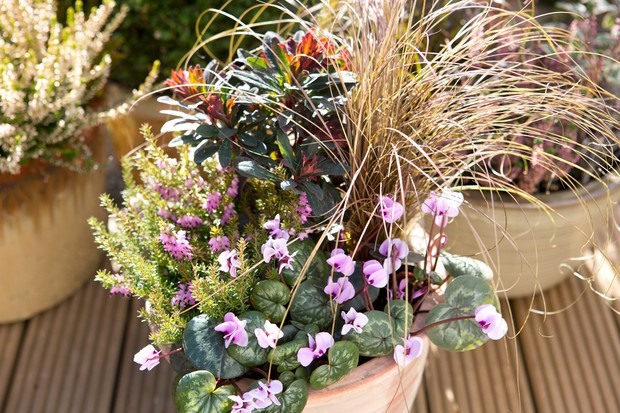 heather-cyclamen-and-euphorbia-2