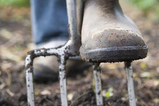 forking-over-the-soil-3