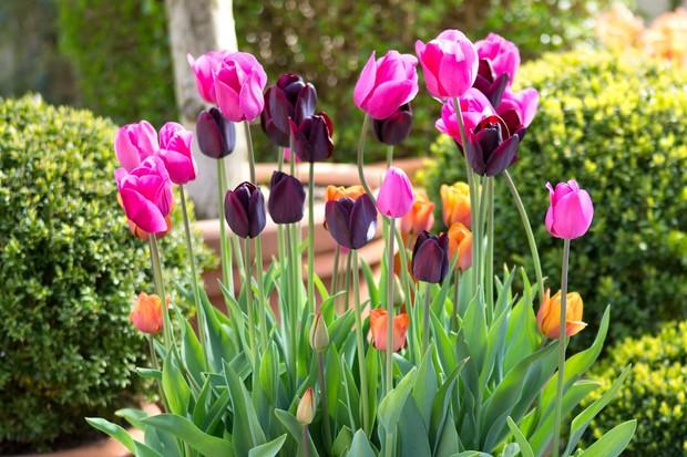 tulip-container-2