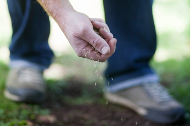 sowing-grass-seed-2