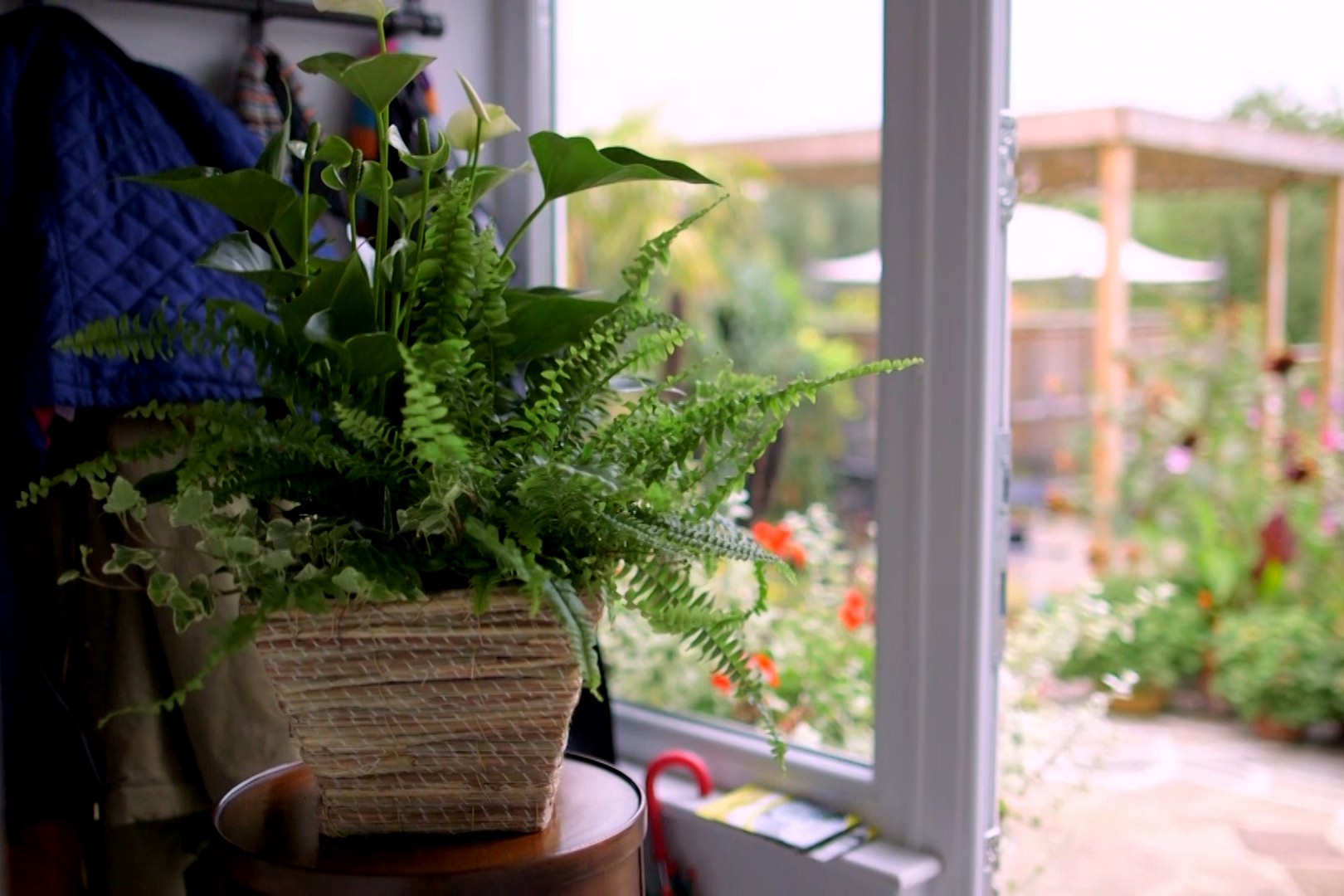 Fern and peace lily in indoor pot display