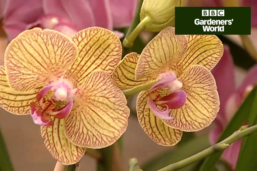 How to care for orchids video