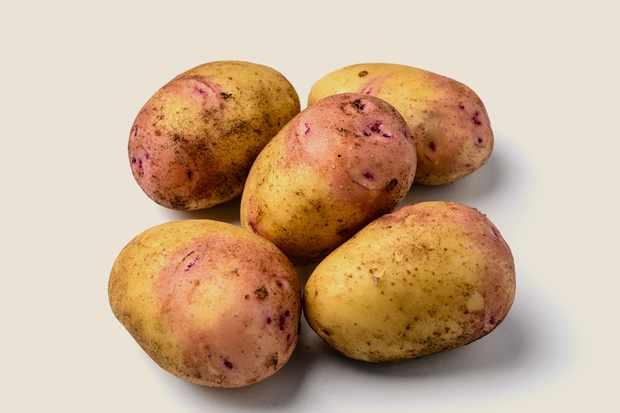 potato-carolus-5