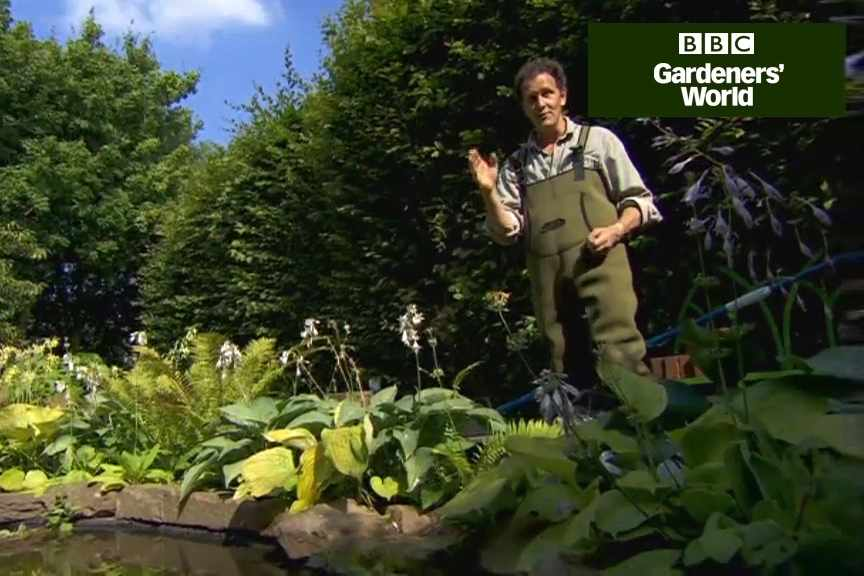 How to clear your pond water