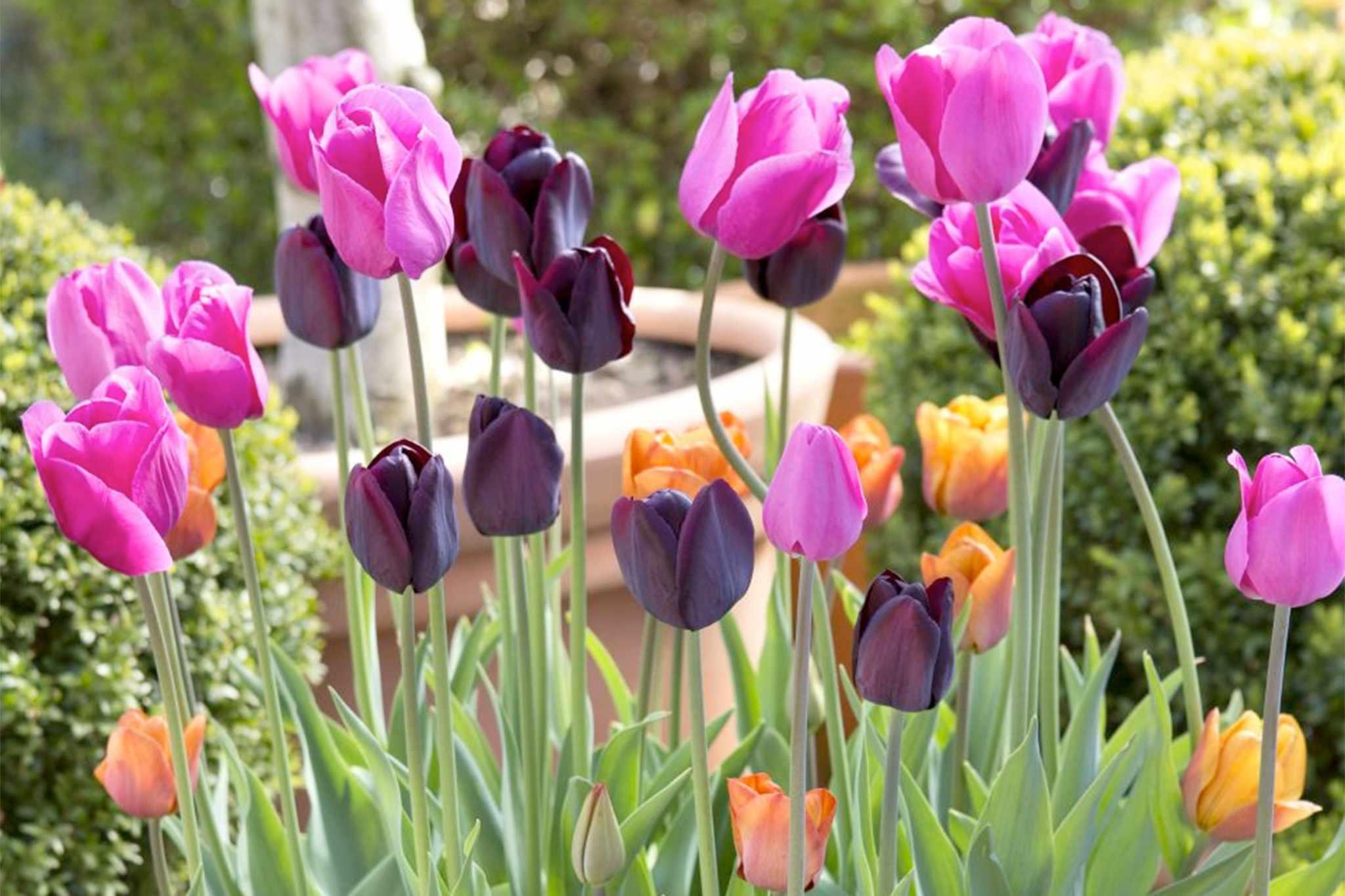 Purple, pink and orange display