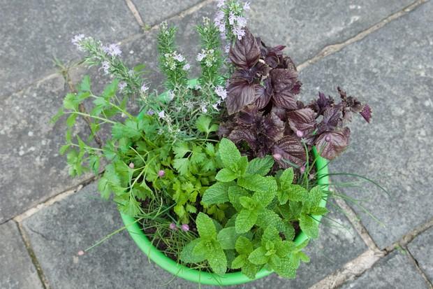 herb-pot-for-vegetables-2