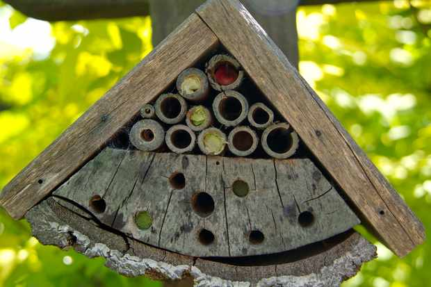 simple-wooden-bee-hotel-with-hollow-bamboo-stems