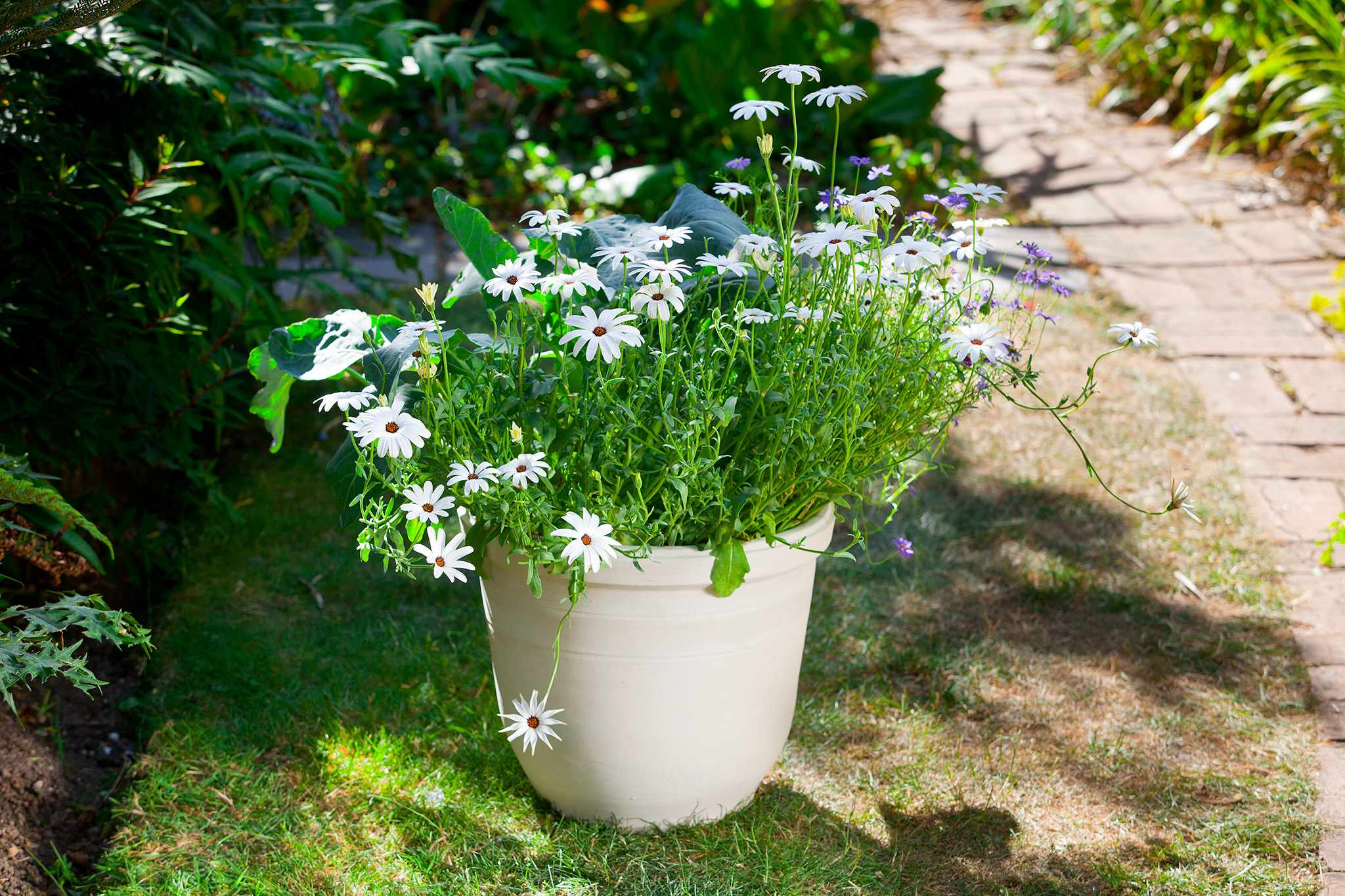 How to sow seeds direct into pots