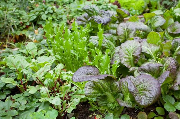 salad-mixes-2