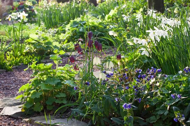pulmonarias-daffodils-and-snakes-head-fritillaries-2