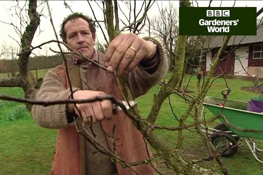 How to prune out bacterial canker video