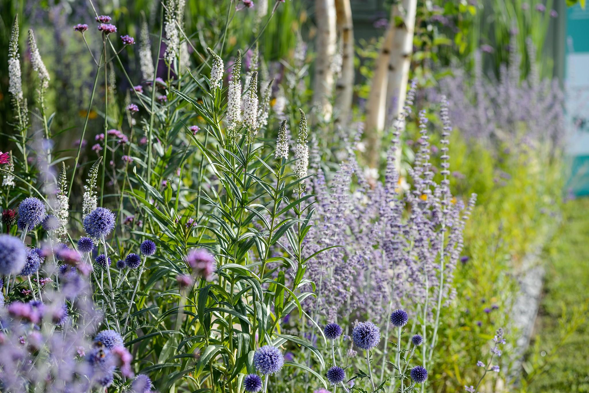 Gardening for beginners: Combining plants