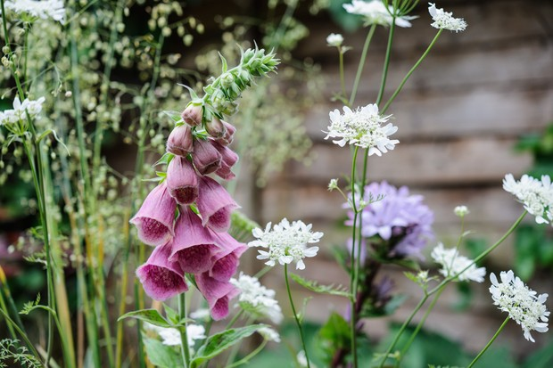 Strawberry foxgloves, orlaya and greater quaking grass