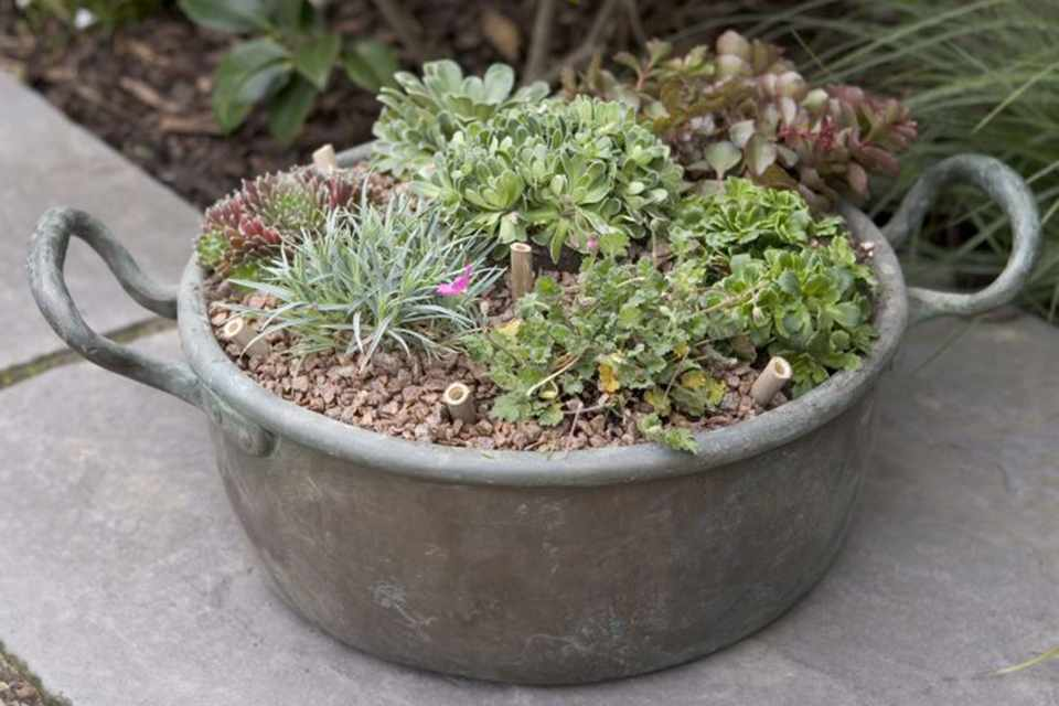 Alpine pot display