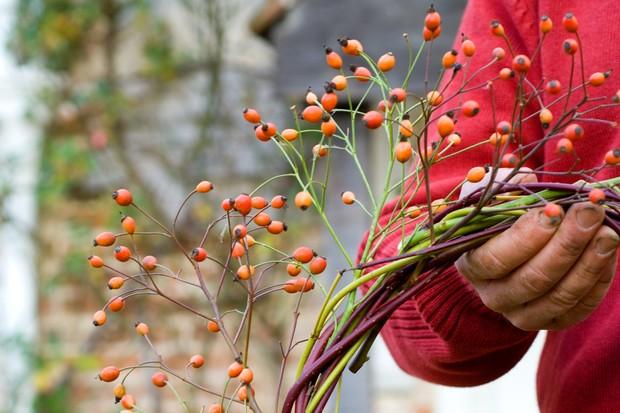Five Of The Best Christmas Wreaths Gardenersworld Com