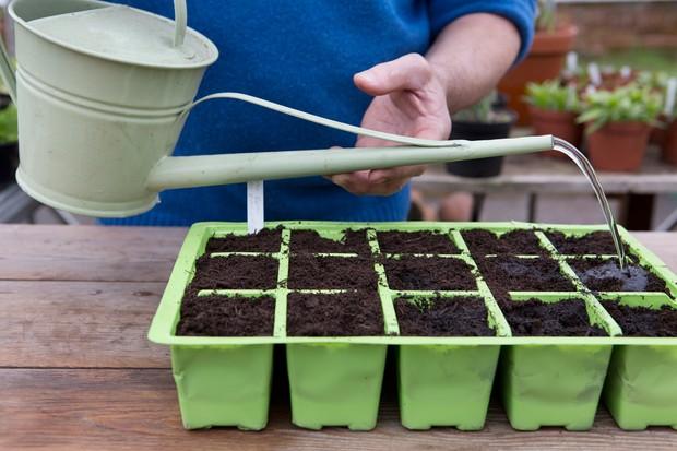 watering-in-seeds-4