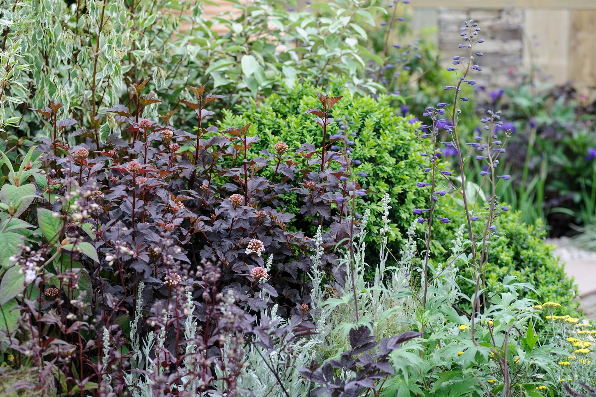 Best Plants with Dark Foliage