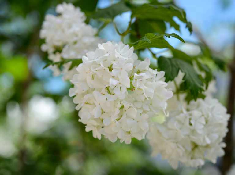 Plants That Look Good All Year Bbc, What Plants Grow All Year Round Uk