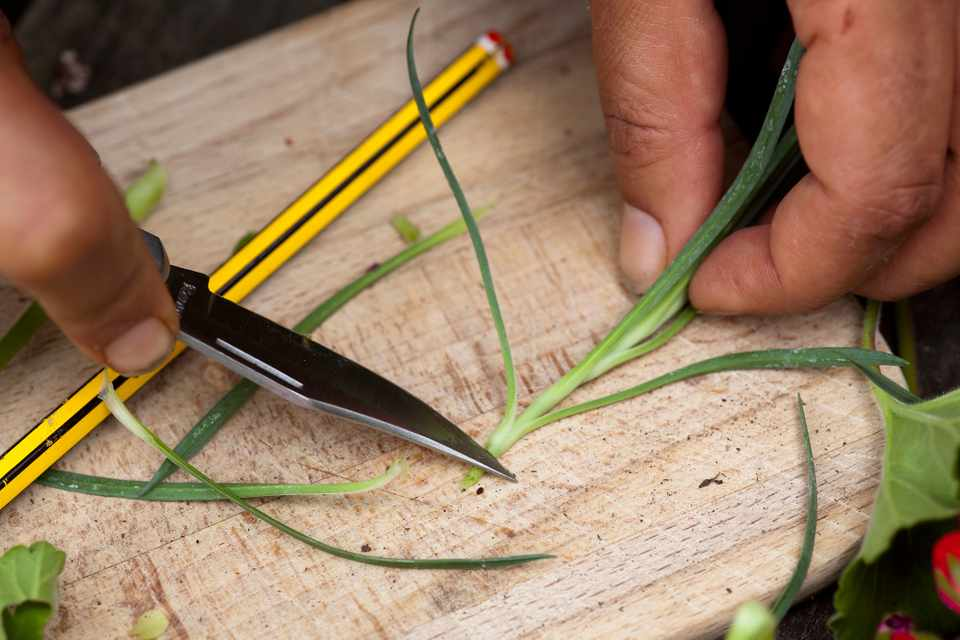 How to take summer cuttings