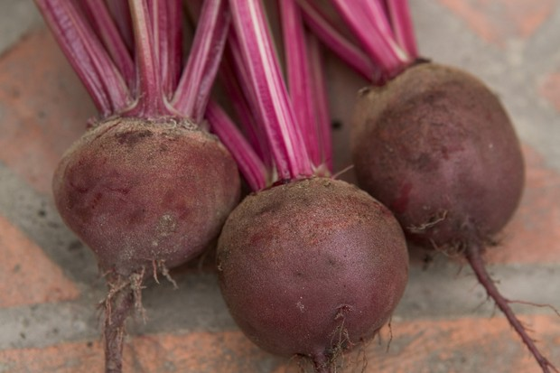beetroot-boltardy-5