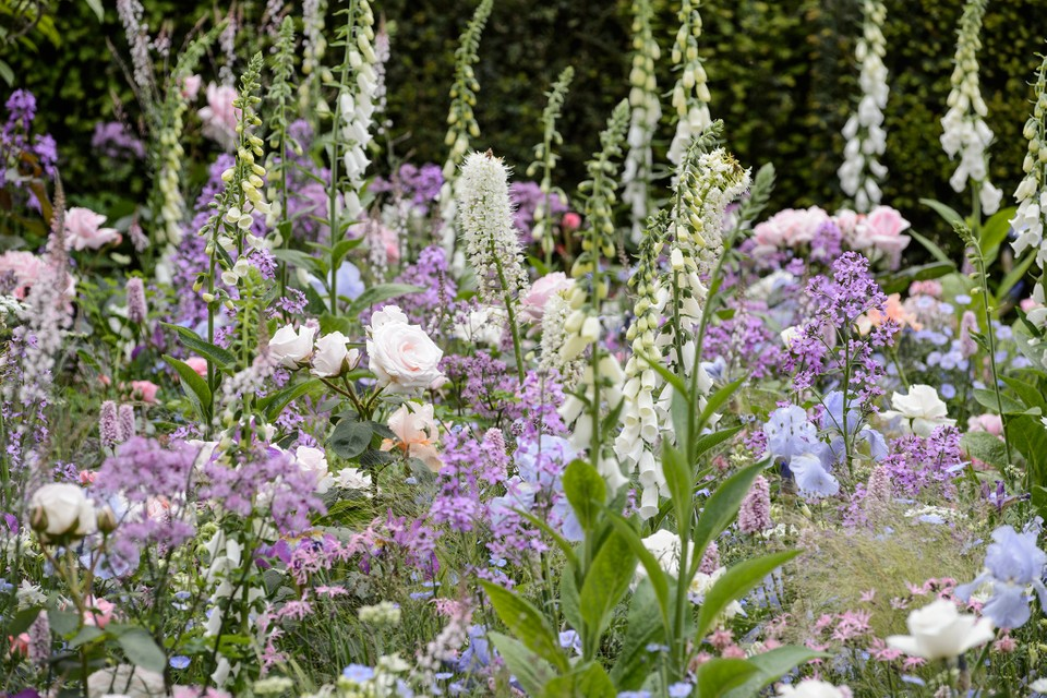 Gardening For Beginners Planting, How To Plan A Cottage Garden Border