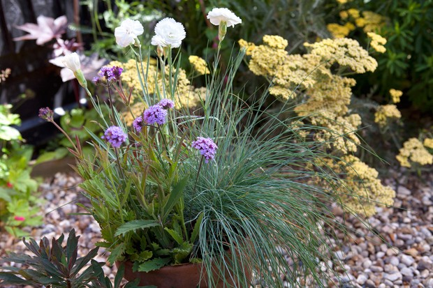 dianthus-verbena-and-festuca-2