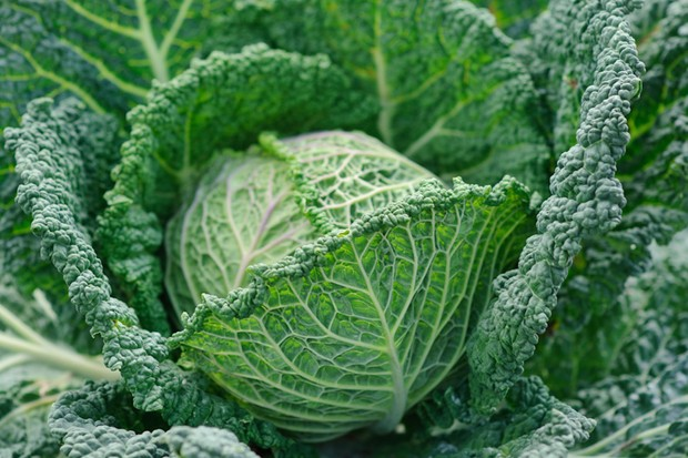 10 best vegetable crops for shade - brassicas