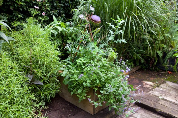 A mixed planter of cardoon, scabious and nepeta