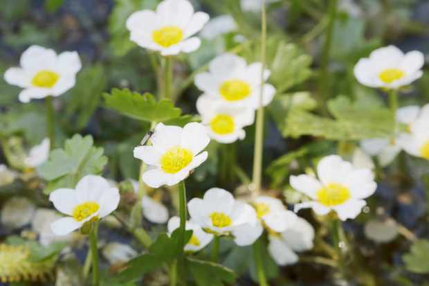Oxygenating Plants to Grow. Photo: Getty Images.
