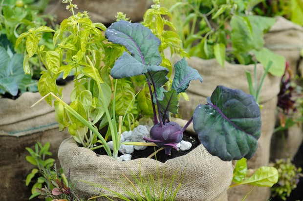 hessian-sack-planted-with-vegetables-3