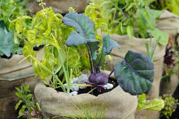 Veg growing in hessian sacks