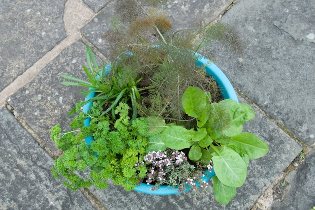 herb-pot-for-fish-2