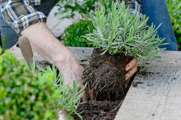 fill-the-bed-with-soil-2