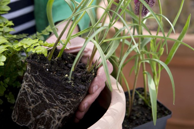 Adding the plants to the pot