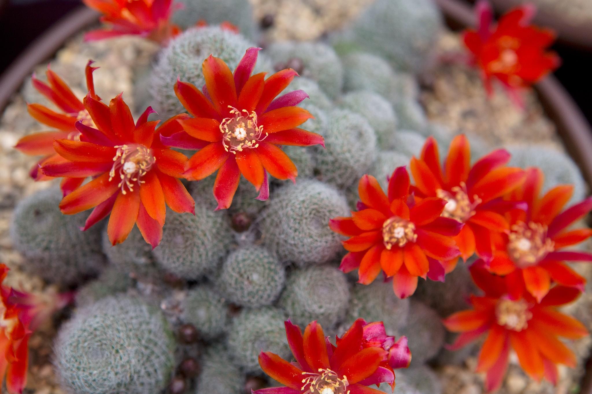 Beautiful Cacti to Grow