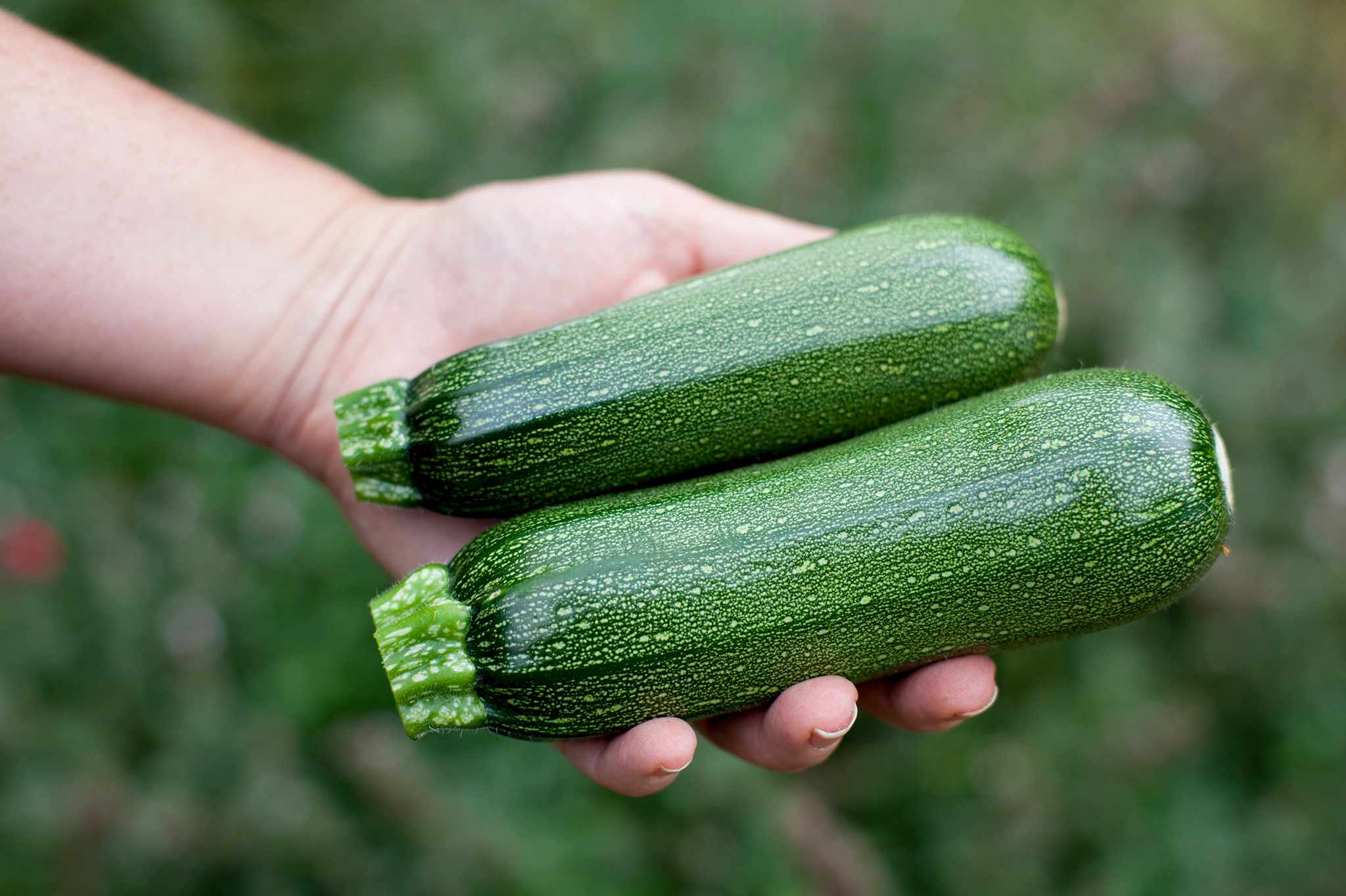 Two courgettes in an open hand