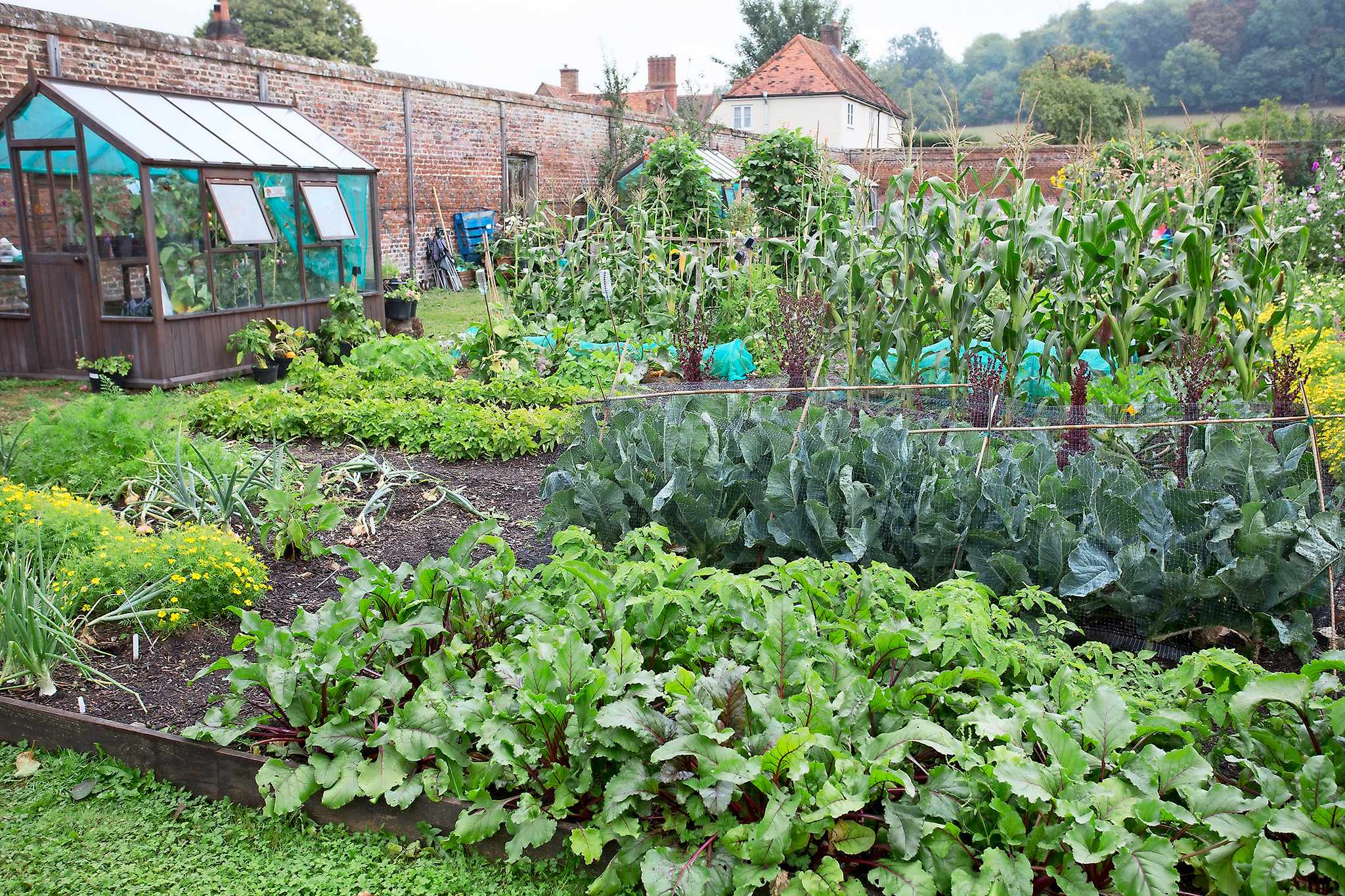Starting a New Vegetable Patch