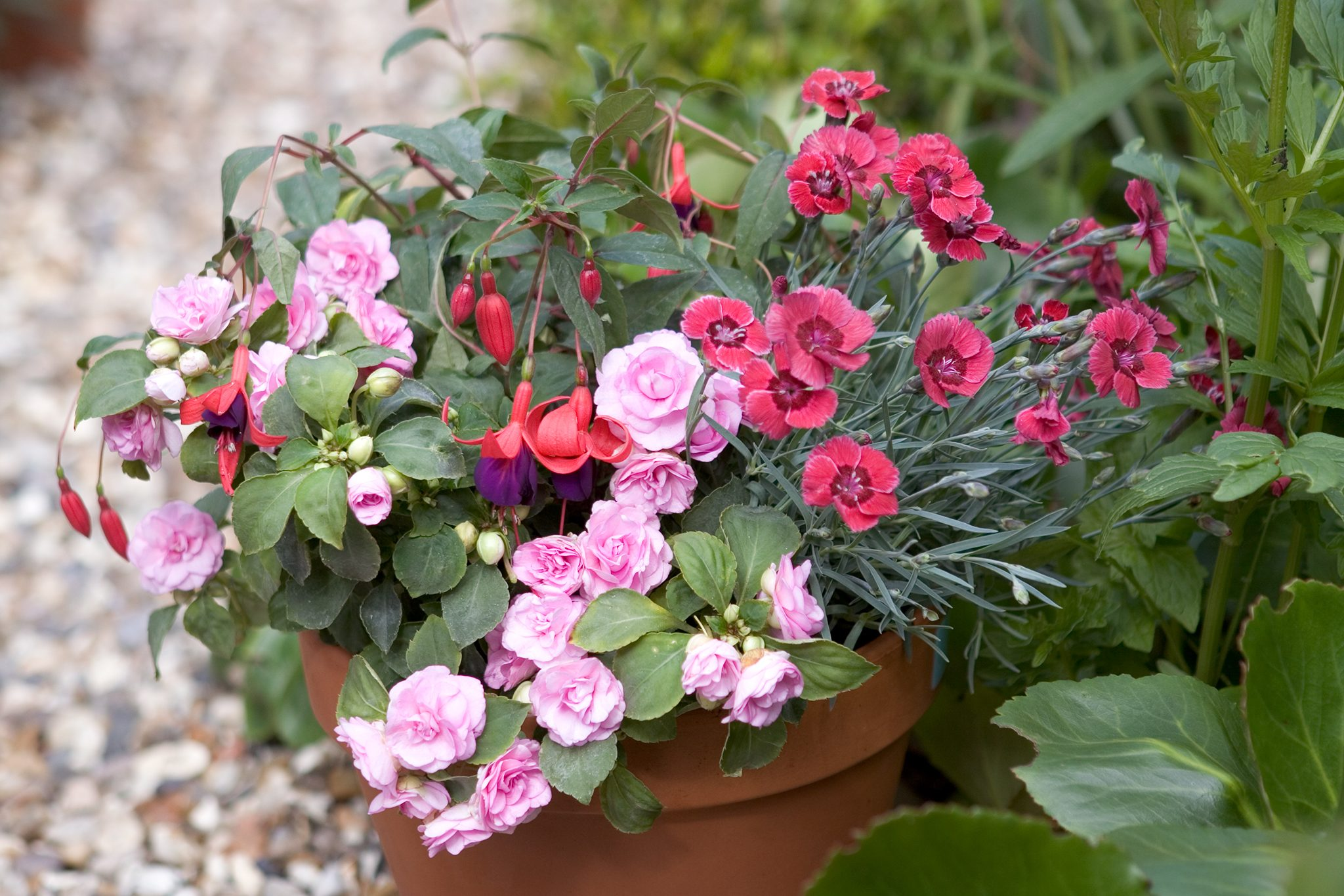 Gardeners World & Top 10 plants for containers - BBC Gardeners\u0027 World Magazine