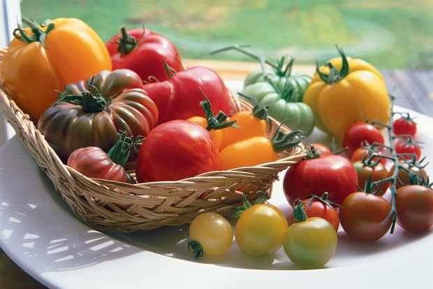 A variety of different sizes, shapes and colours of tomatoes on a windowsill