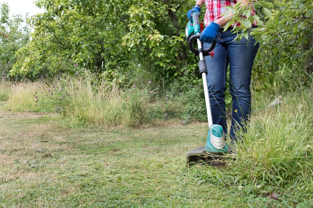 Cutting down a perennial meadow with a strimmer