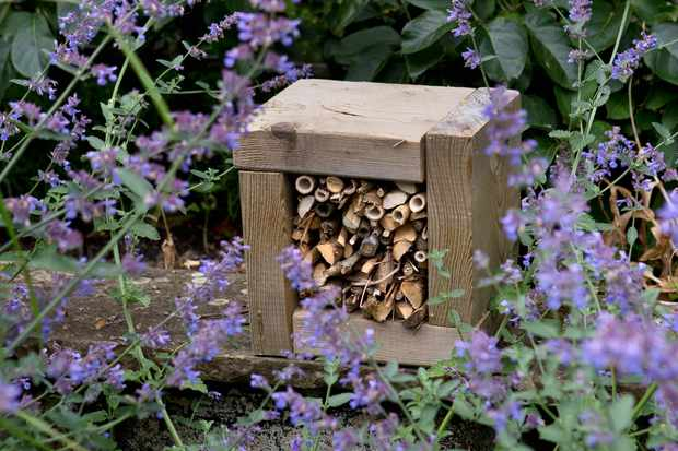 bee-hotel-with-catmint-2