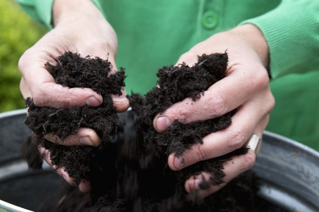 Heuchera and viola pot display - adding compost